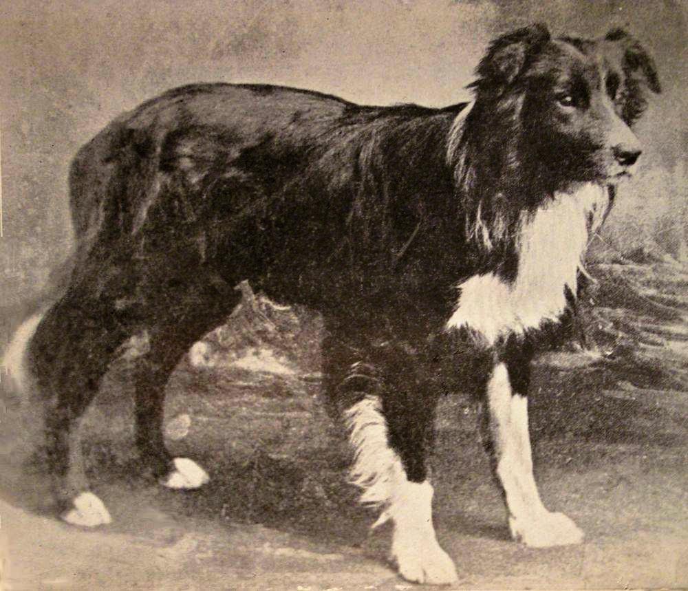 Dog Breed Development