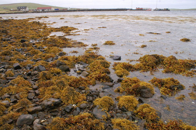 File:Autumnal shore of Baltasound voe - geograph.org.uk - 1507663.jpg
