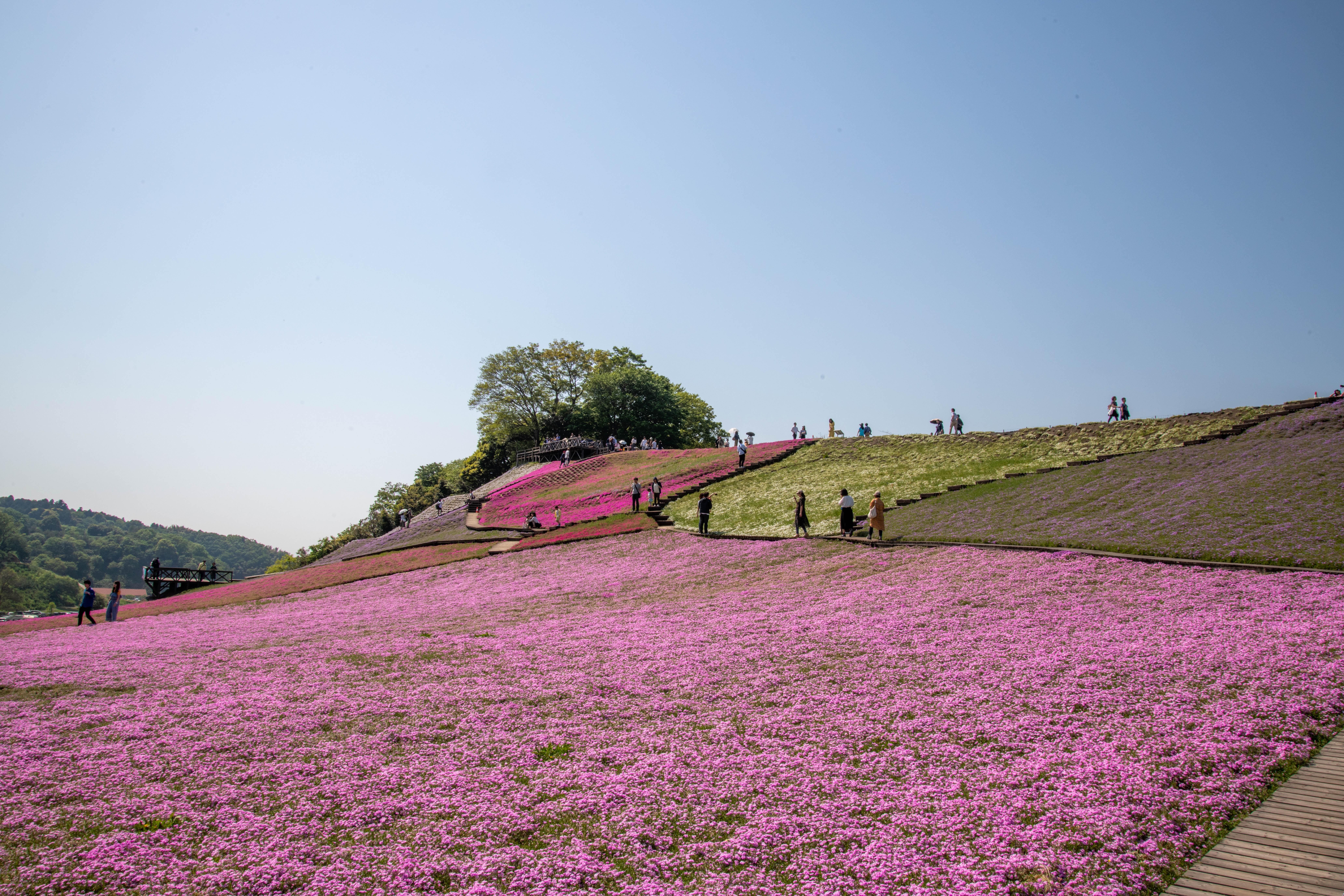 ファイル country farm tokyo german village 39857730340 jpg wikipedia
