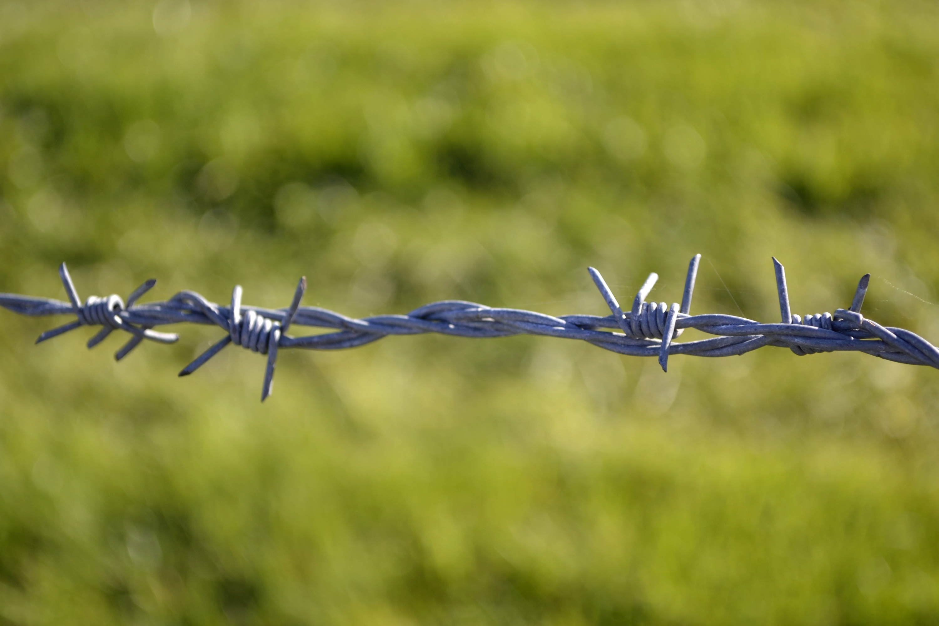 Description Ex-Iron Curtain barbed wire.JPG