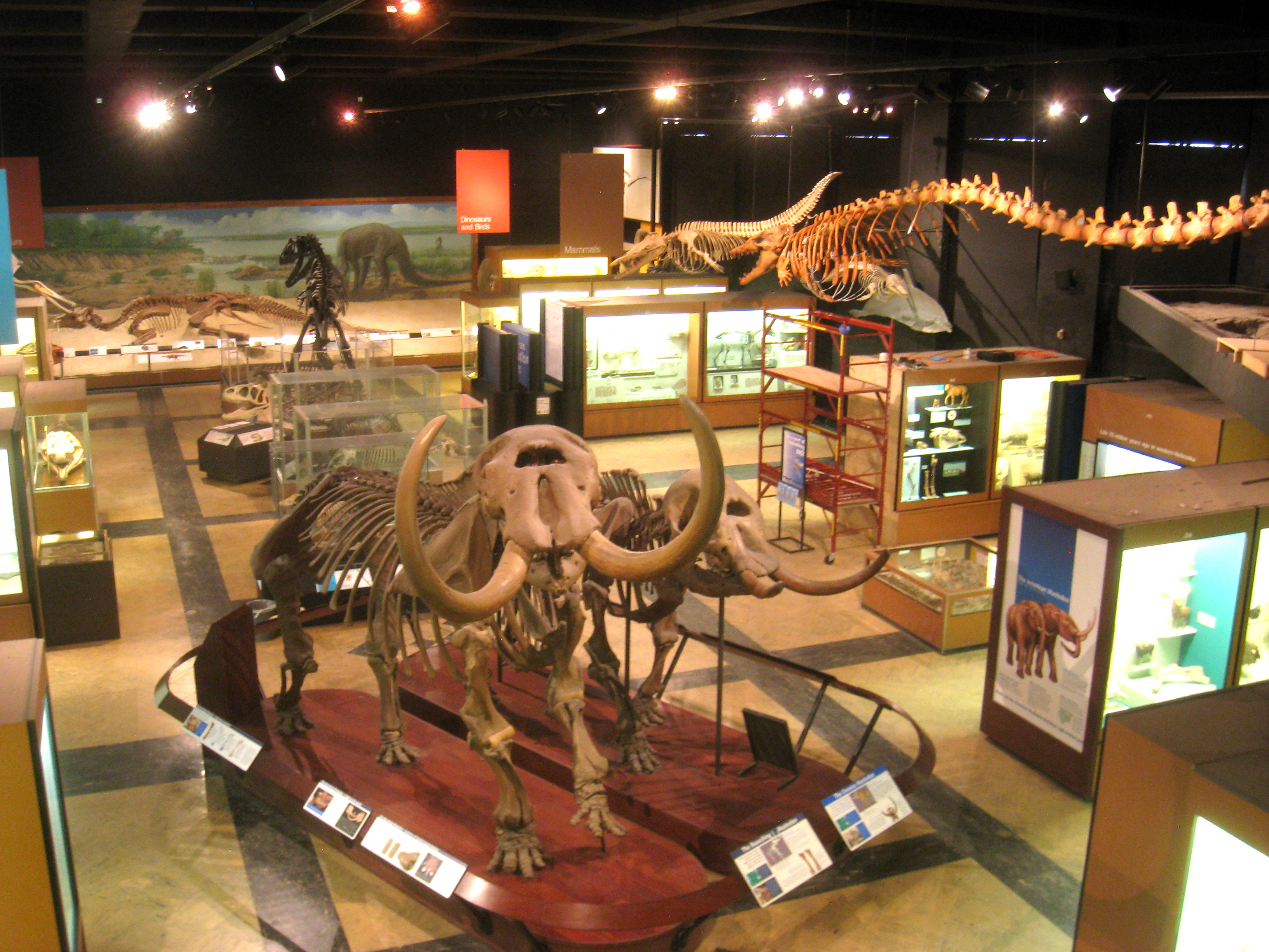 Colorado University Natural History Museum