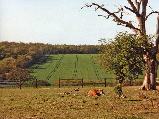 Farmland, Trent Park, Enfield - geograph.org.uk - 889368