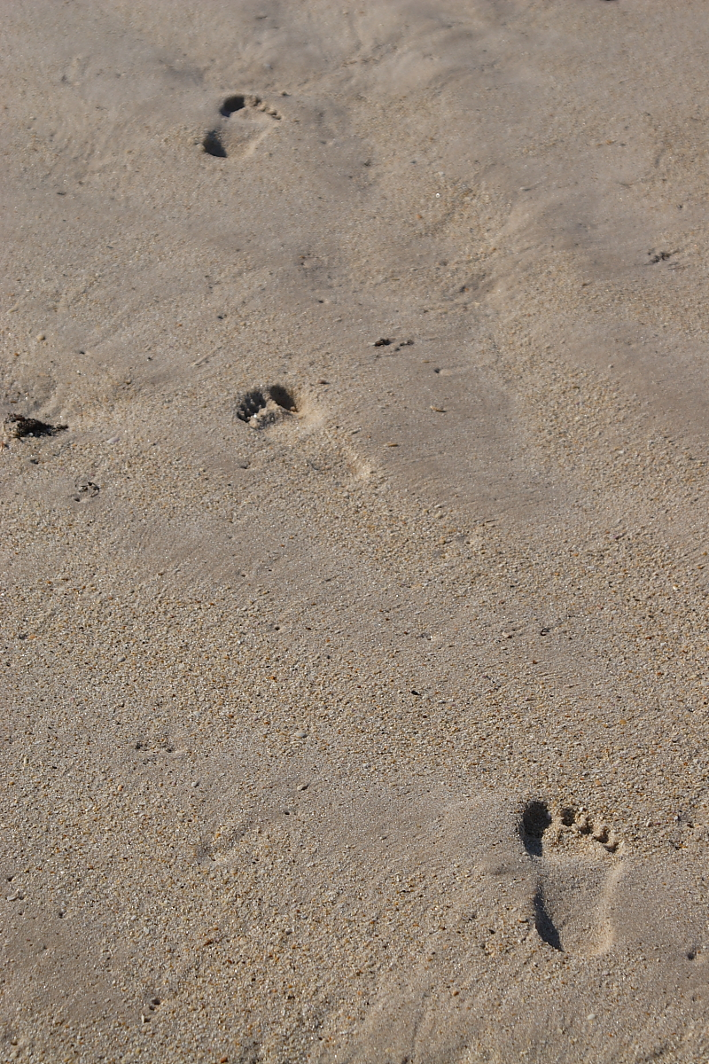 Description footprints in sand jpg