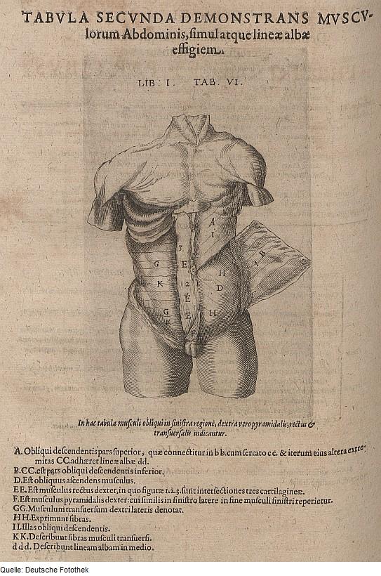 Datei:Fotothek df tg 0006551 Biologie ^ Anatomie ^ Mensch.jpg ...