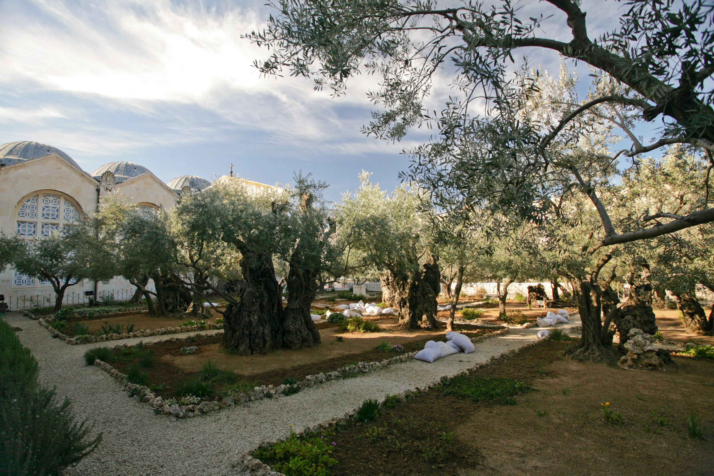 File:Gethsemane Garden (Mount Of Olives)