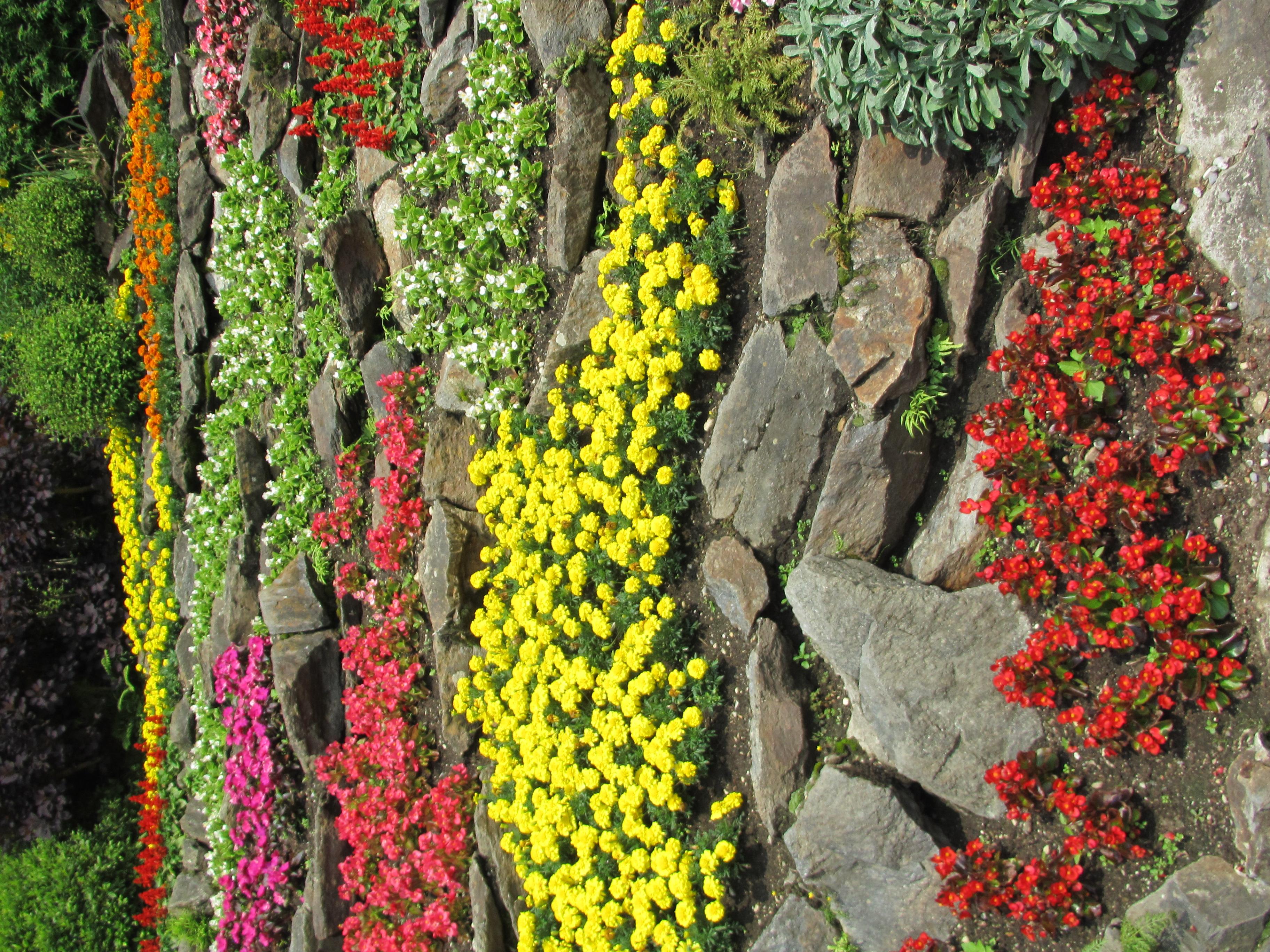 File giardino roccioso fiorito jpg wikimedia commons - Giardino fiorito torino ...