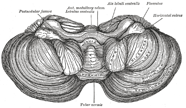 Sagittal View Of The Human Brain in addition 1880560 together with Brain Sagittal Section likewise Cross Section Of The Brain Labeled The Brain Sagittal Section Anatomy Labeled Miscellaneous also 108. on sagittal brain diagram labeled