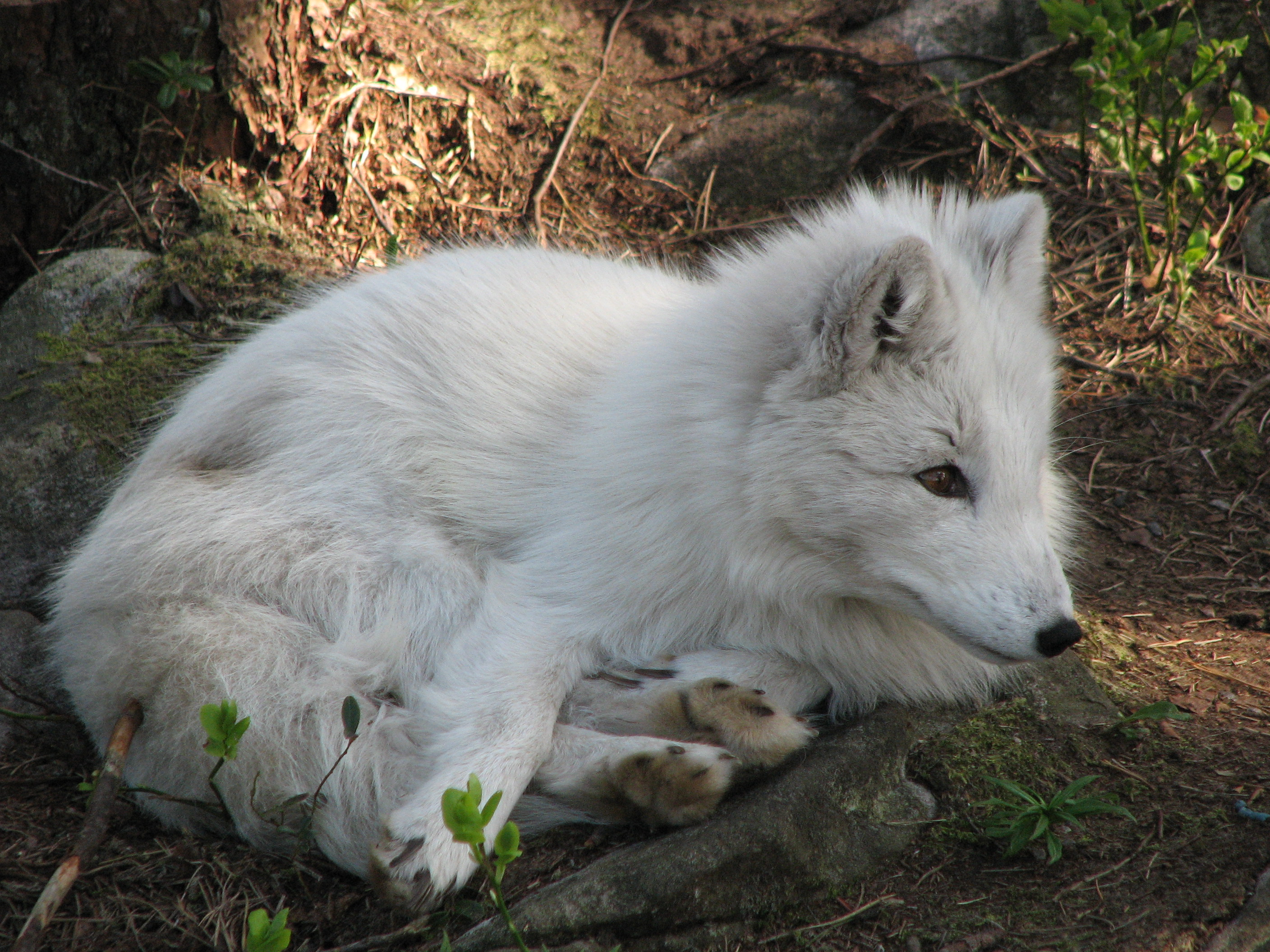 Image Result For Arctic Coloring Pages