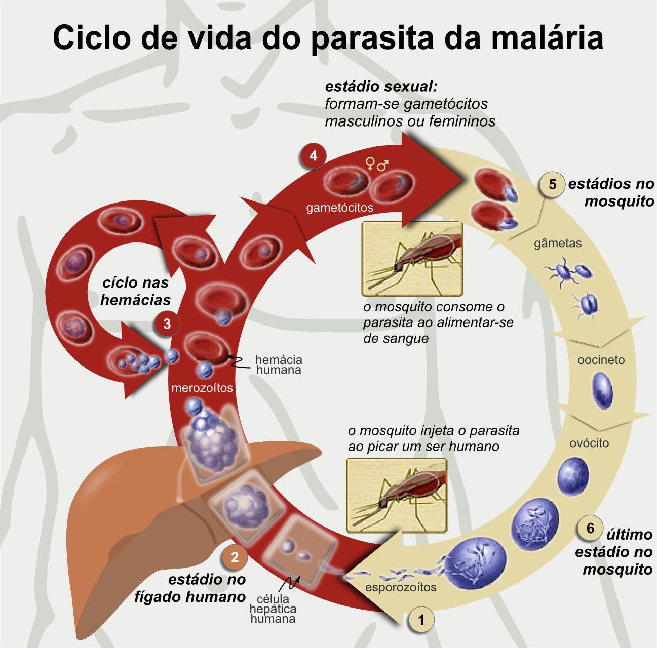 O que os parasitas em um organismo têm medo