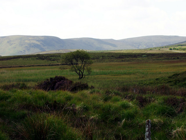 File:Marshland at Loughanagally - geograph.org.uk - 487143.jpg