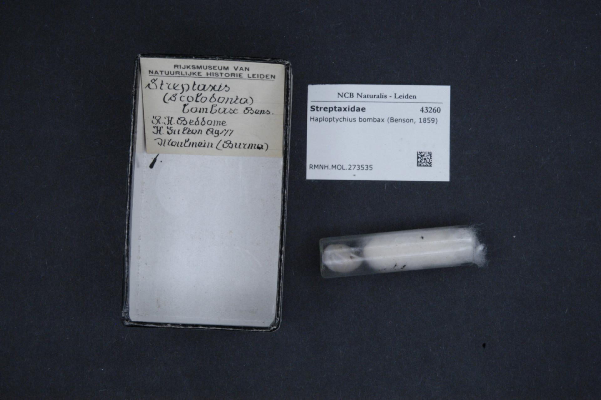 File:Naturalis Biodiversity Center - RMNH MOL 273535 - Haploptychius