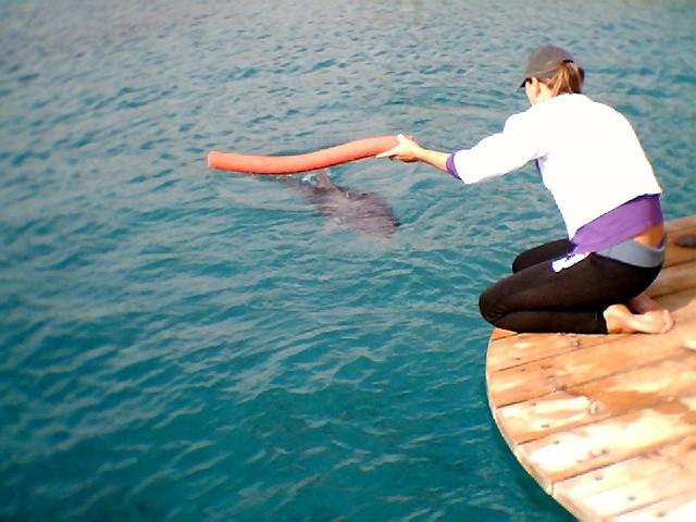 אימון לדולפין