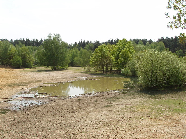 """Pond and sandpit, Horsell Common - site for """"The War of the Worlds"""" - geograph.org.uk - 168459"""