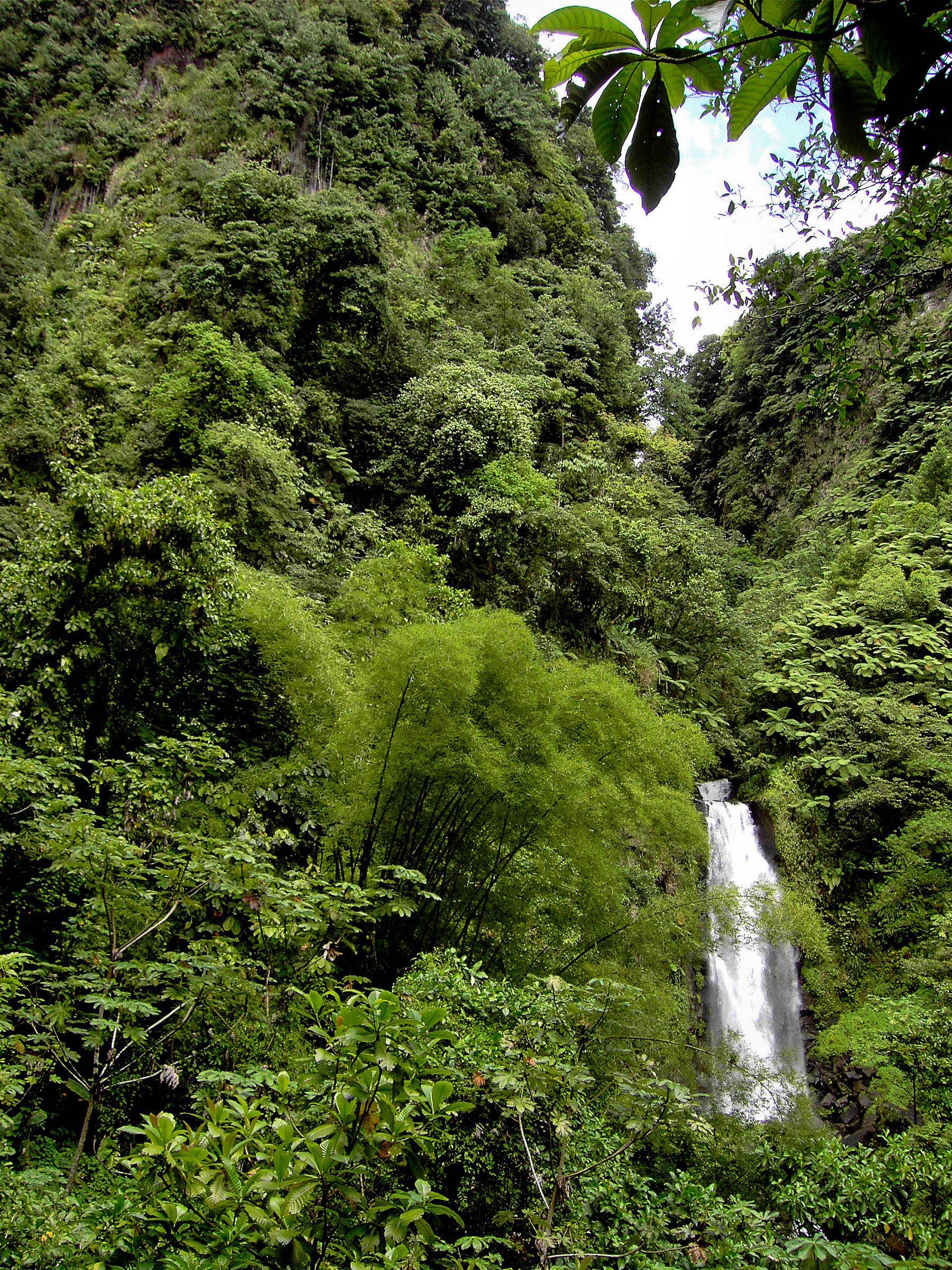 Tropical Island Amazonia Preise