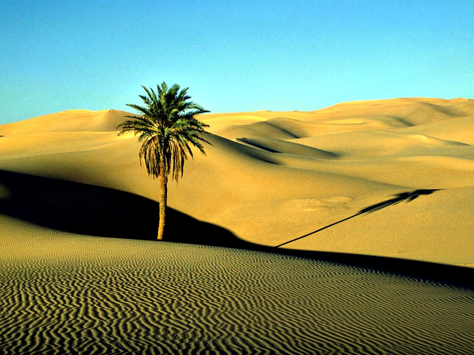 """Вышивка крестом.  Схема вышивки  """"Пустыня """".  Сейчас появилось множество ниток, например, нити с люрексом..."""