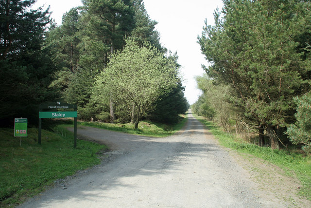 Slaley Forest - geograph.org.uk - 796576