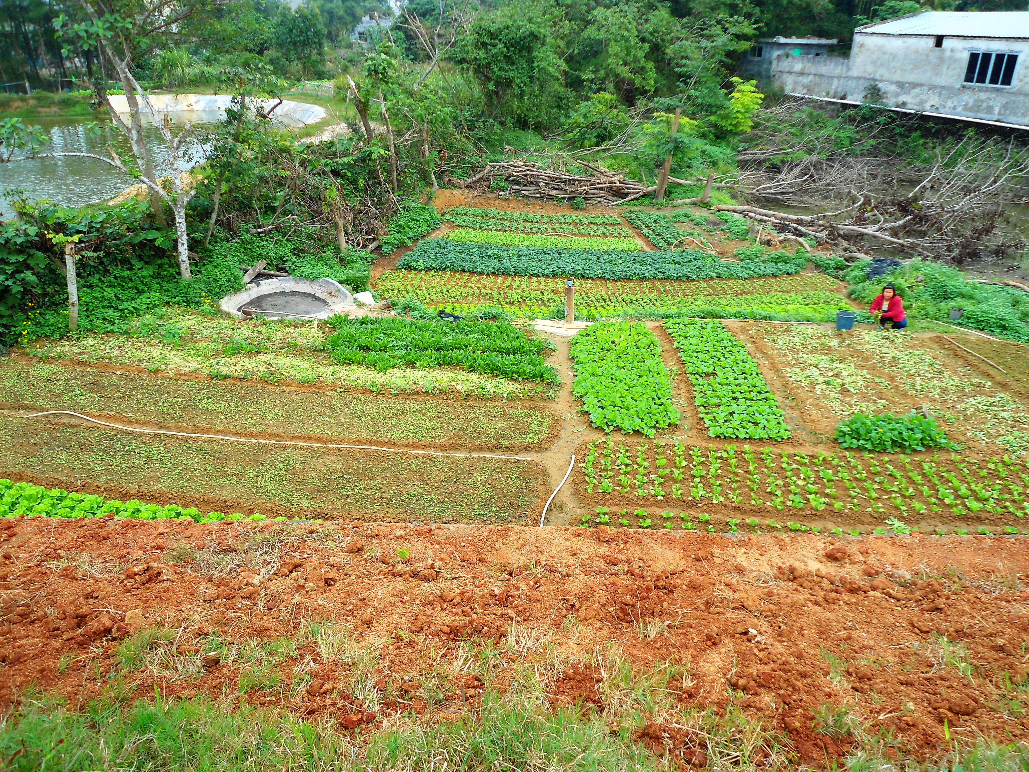 File Small farm in Hainan Province 01 Wikimedia mons