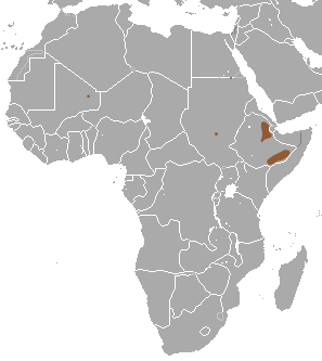 The average adult weight of a Somali shrew is 11 grams (0.02 lbs)