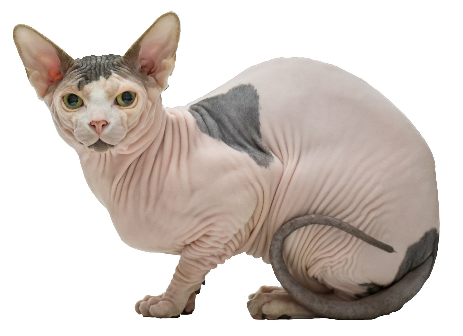 What Does Cat  Leather Mean