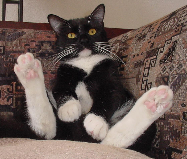 tuxie cat