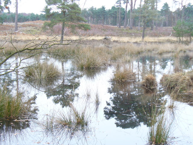 Wisley Common Pond - geograph.org.uk - 1088975