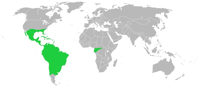 File:WorldBromeliadDistribution.jpg
