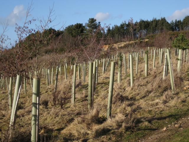 Diy Tree Tubes