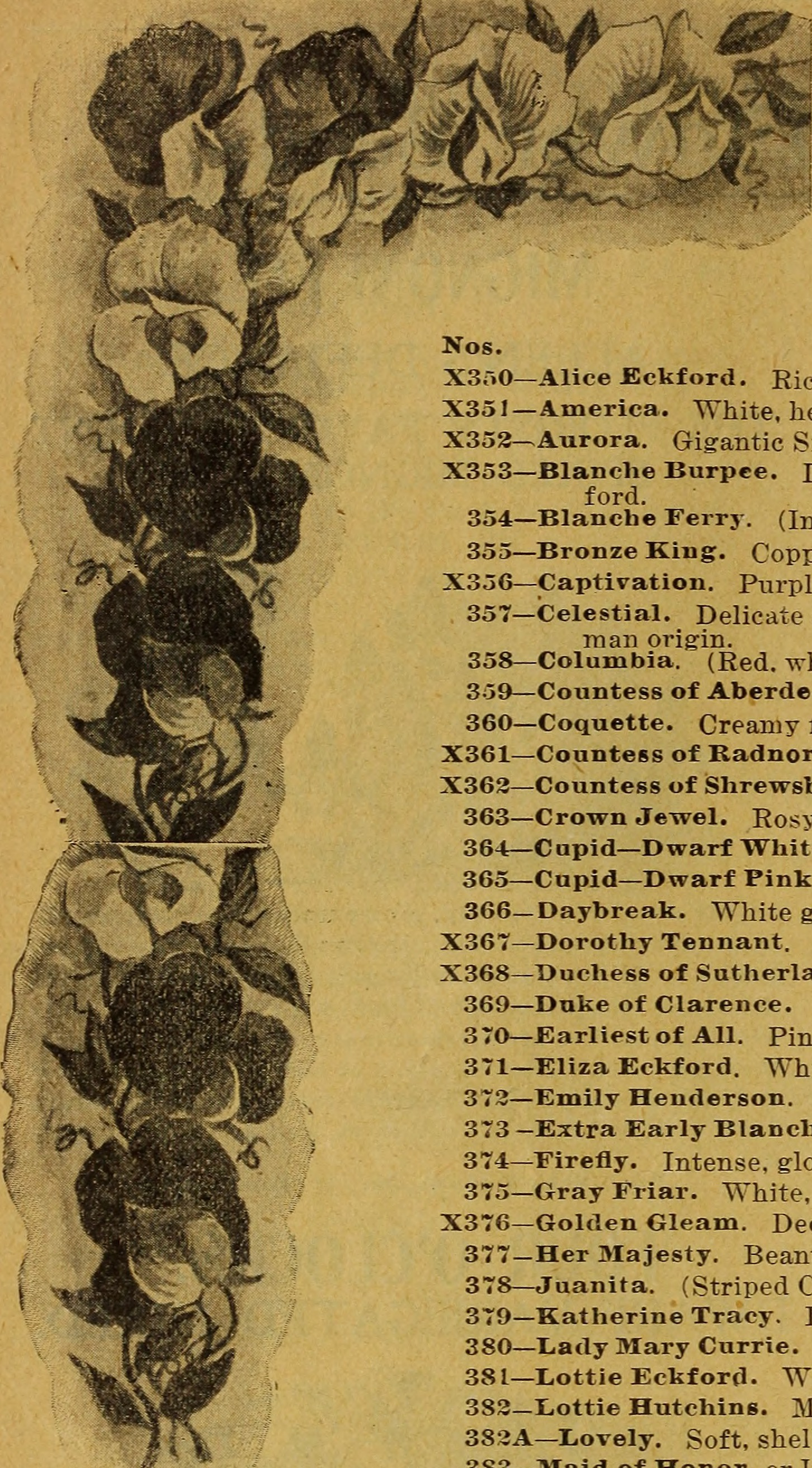 File1900 Catalogue Of Plant Seed Company Reliable Vegetable Farm