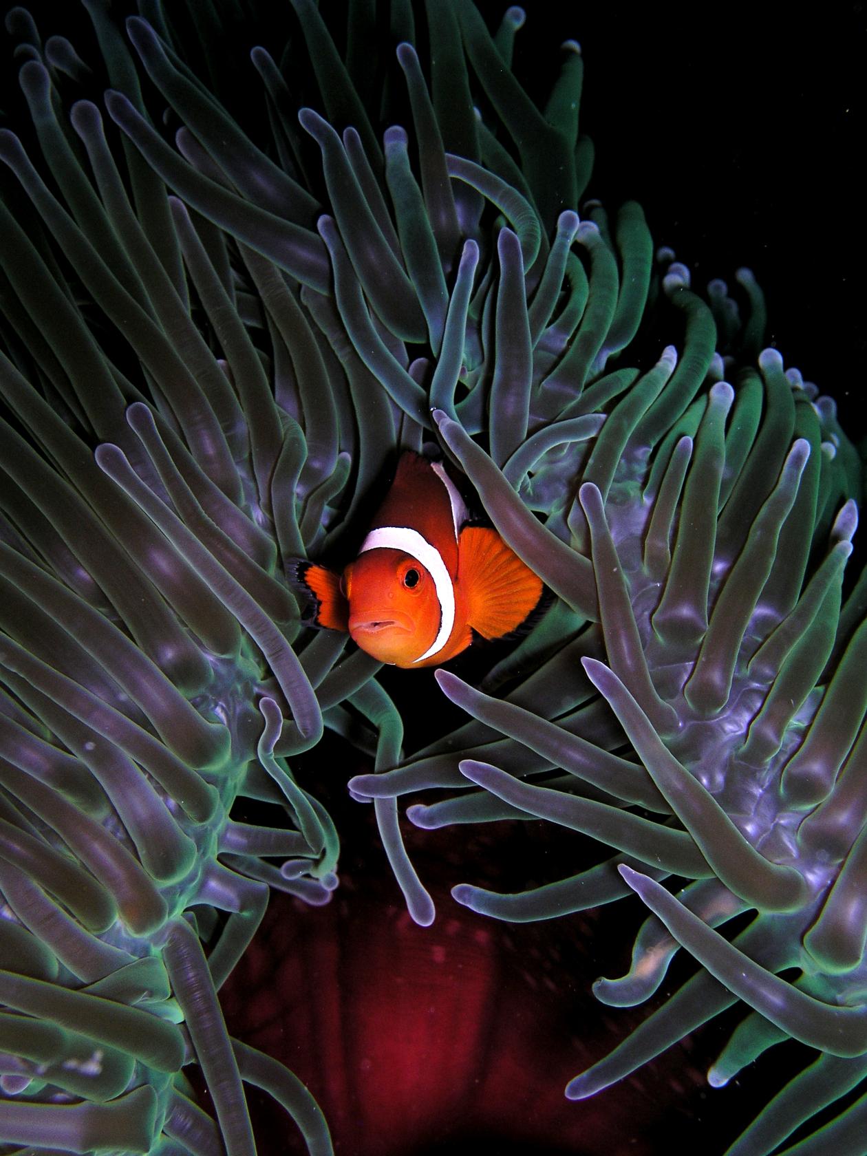 Nemo & friends are lost at sea   EarthBebe