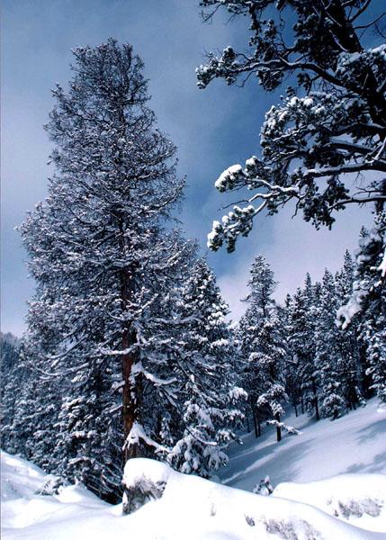 מה מאפיין את מזג האוויר בחורף ?