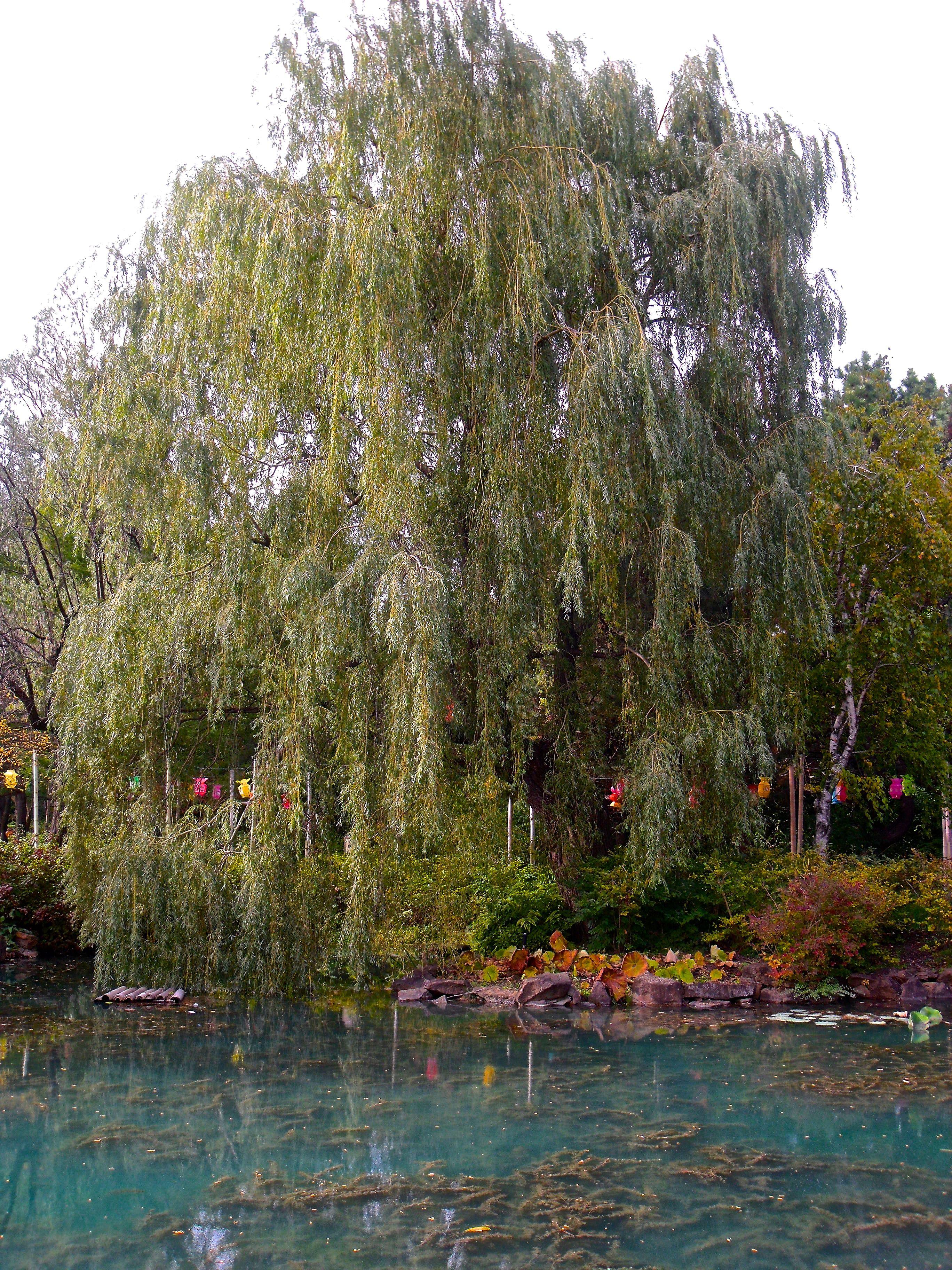 File:Bateau De Pierre (Jardin Botanique Montréal) 03