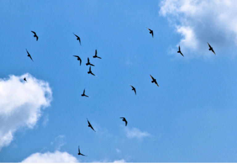 File:Birds in the sky picture.png