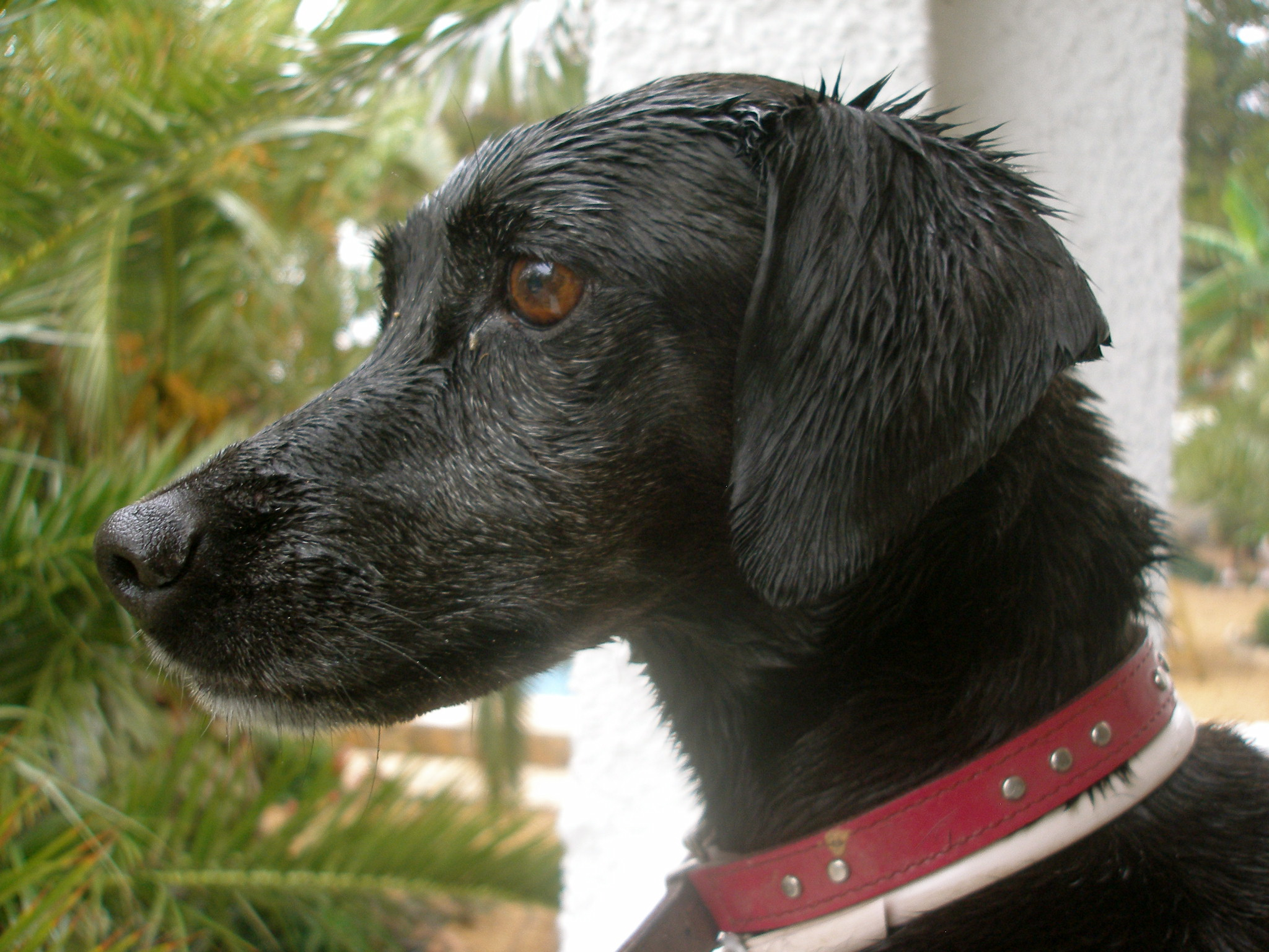 Black Dog Head Planter Bas