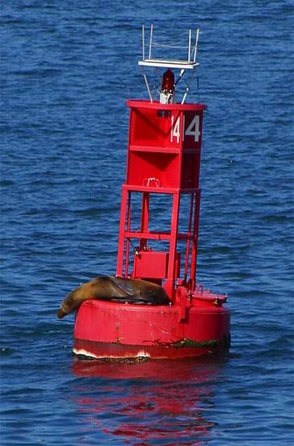 A sea lion on navigational buoy #14 in San Diego Harbor.