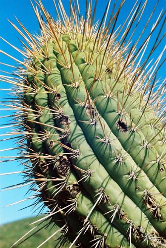 File:CactusChile.jpg