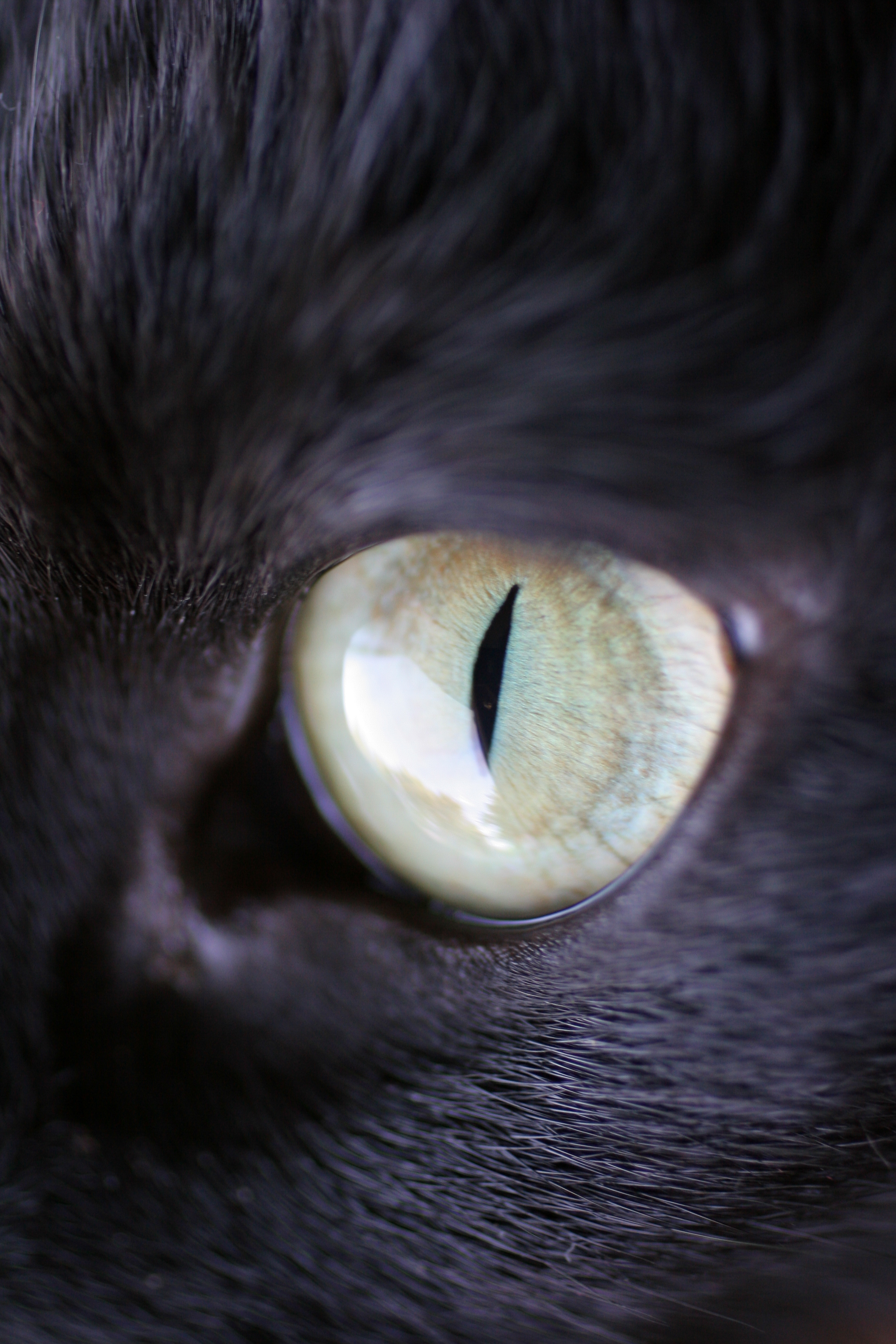 pictures of cat eyes Photo
