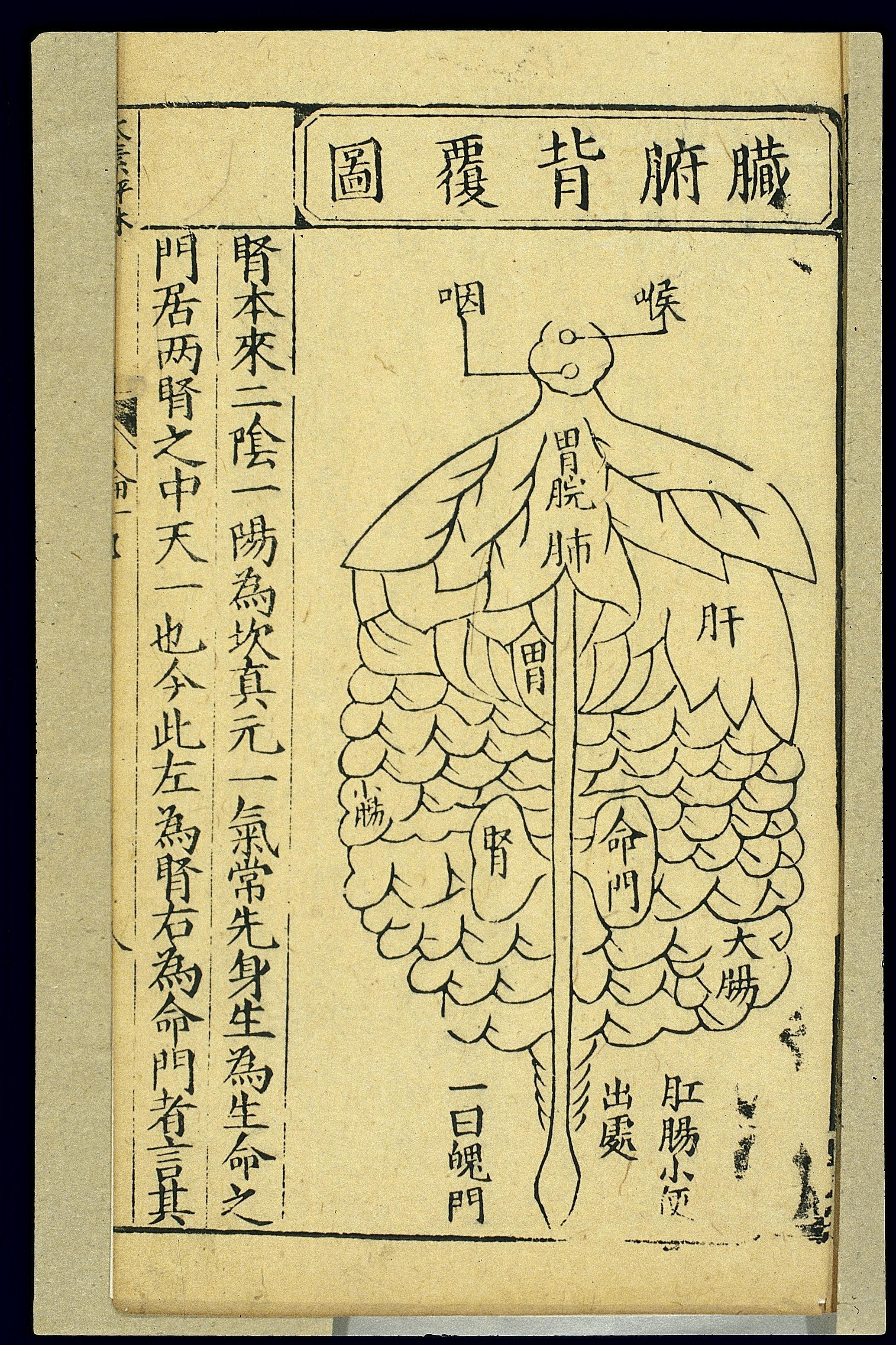 Filedistribution Of Internal Organs Back View Chinese Woodcut