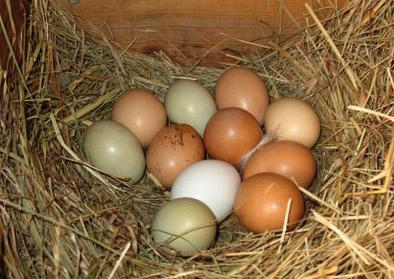 Eggs with nest