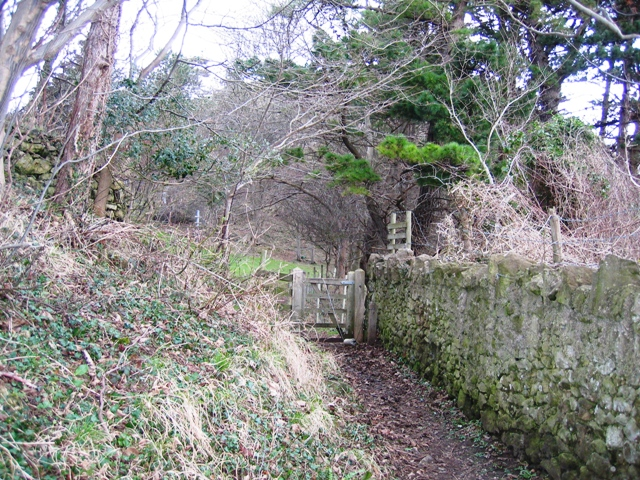 File:Footpath in Haulfre Estate - geograph.org.uk - 340057.jpg