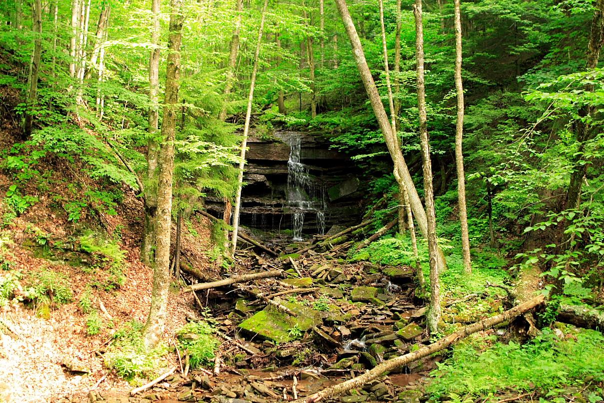 File:Forest-Stream-Waterfall ForestWander.JPG - Wikimedia ...