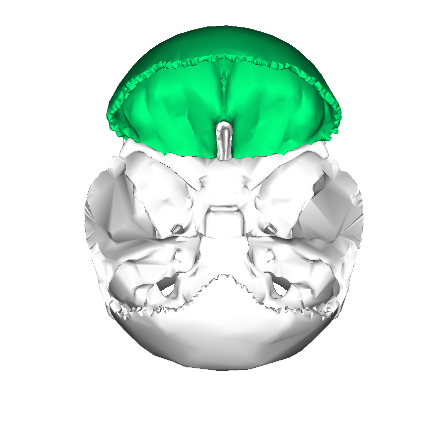 Filefrontal Bone Superior2g Wikimedia Commons