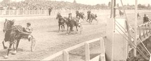 Highland Fling (horse) New Zealand Standardbred racehorse