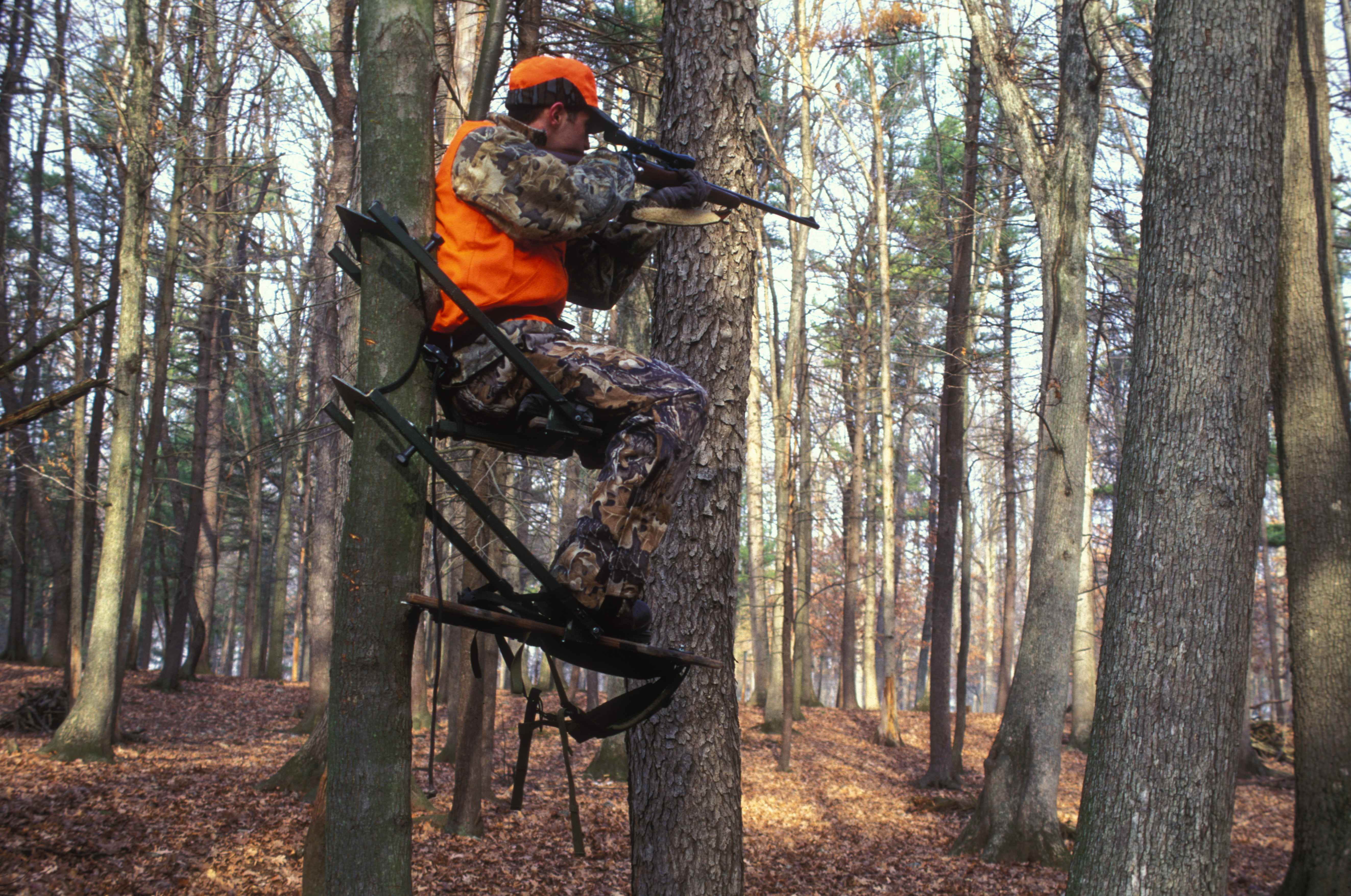 Bow Hunting Near Bedding Areas