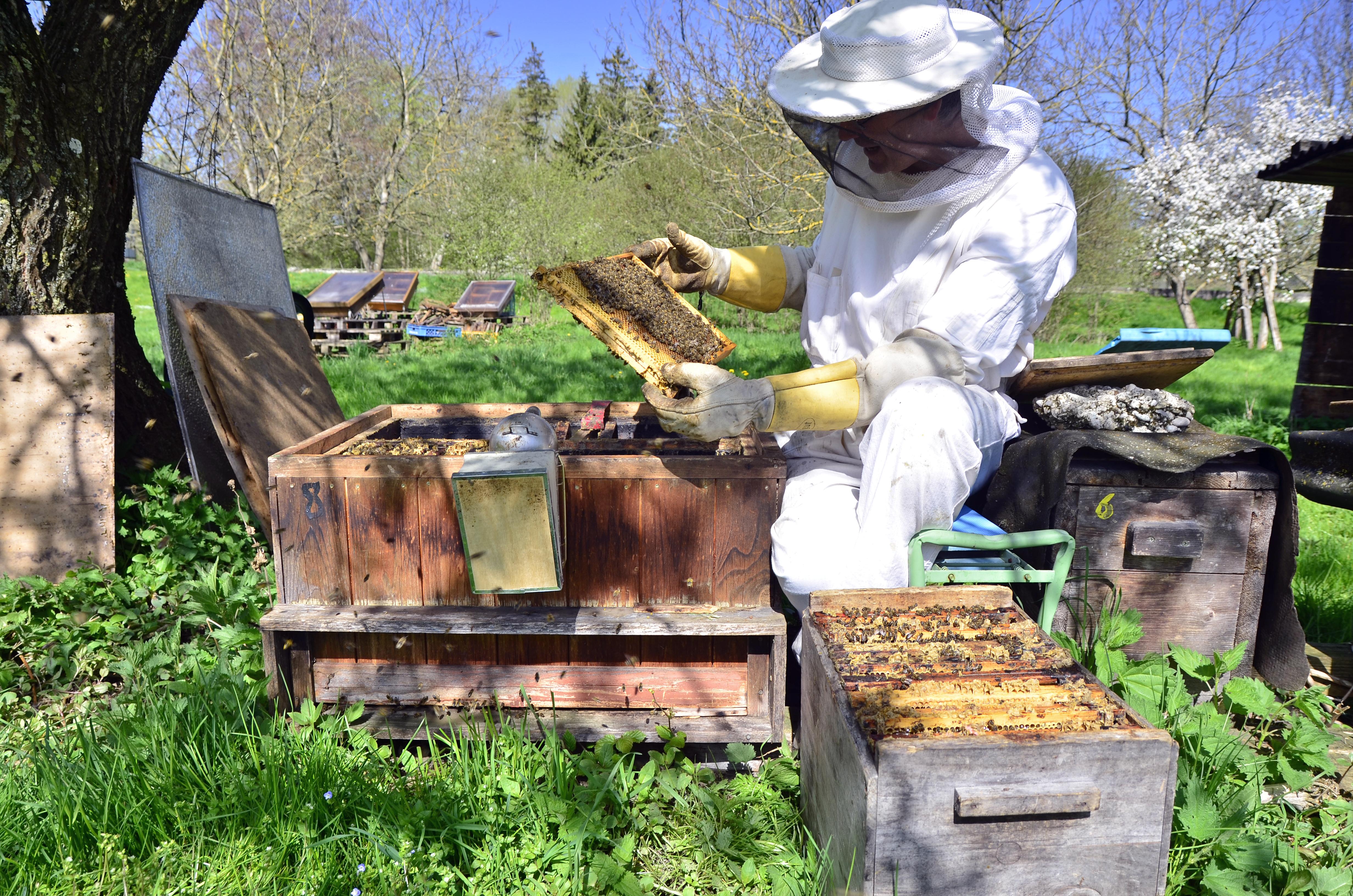 LIFE OF BEE – WELT, BIENEN, HONIG UND DAS GROSSE STERBEN
