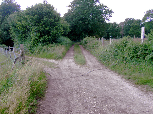 Junction of tracks in Clapham Wood - geograph.org.uk - 870419