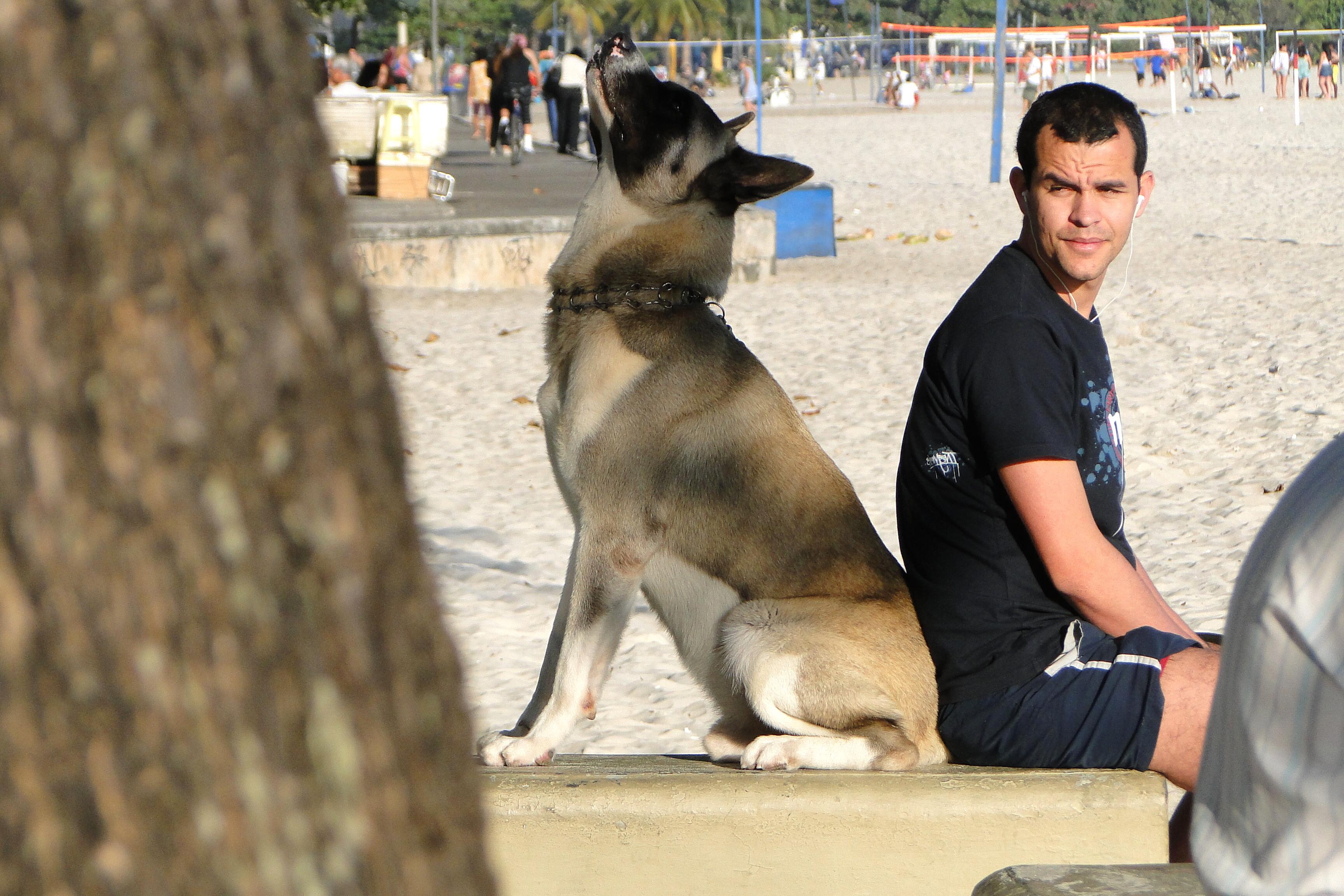 Description man and dog - beach at niteroi - rio de janeiro - brazil