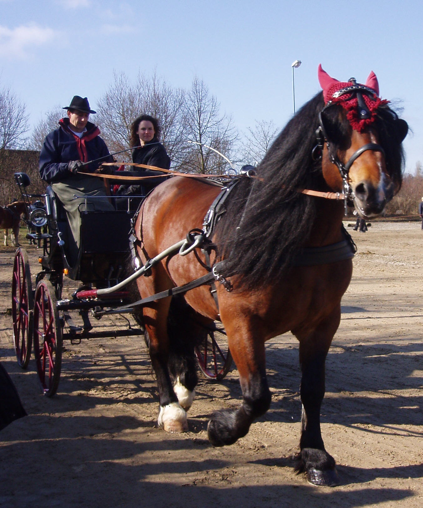 Noriker - Horse Scanner