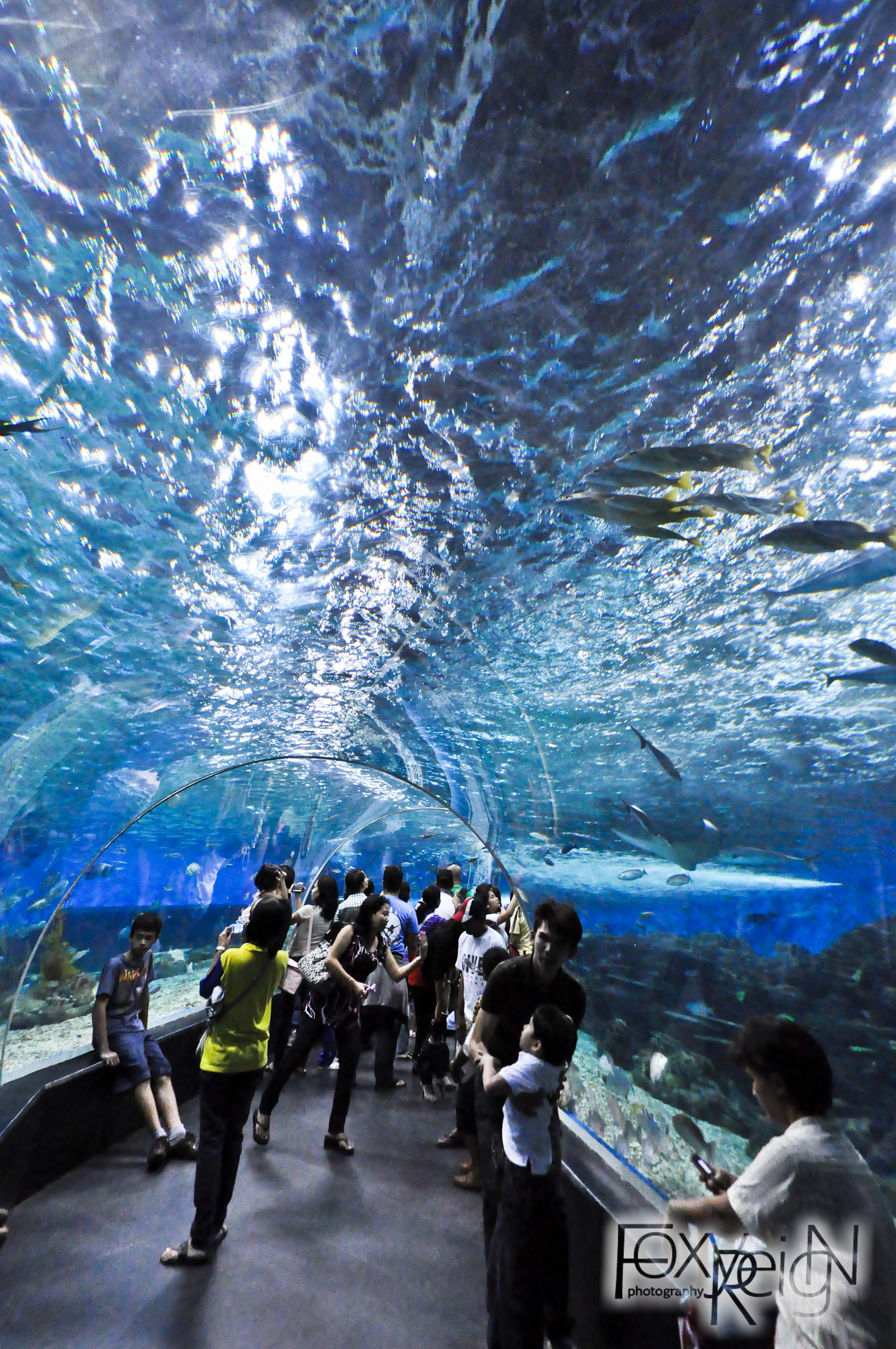 You searched for Manila Ocean Park One Stop Travel Guides - Tourism ...