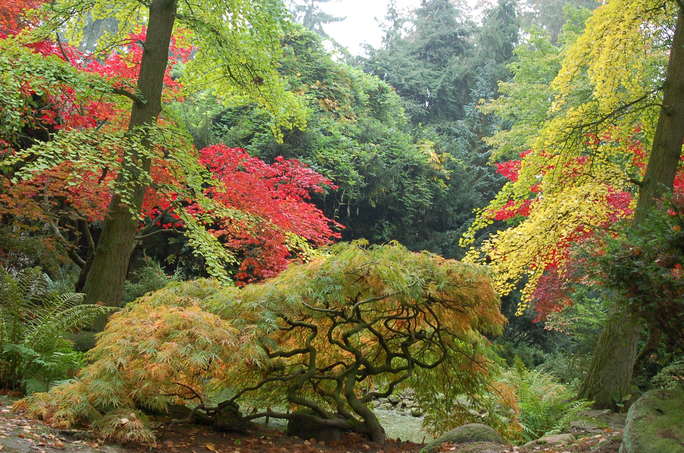 Ogród Japoński-Przelewice