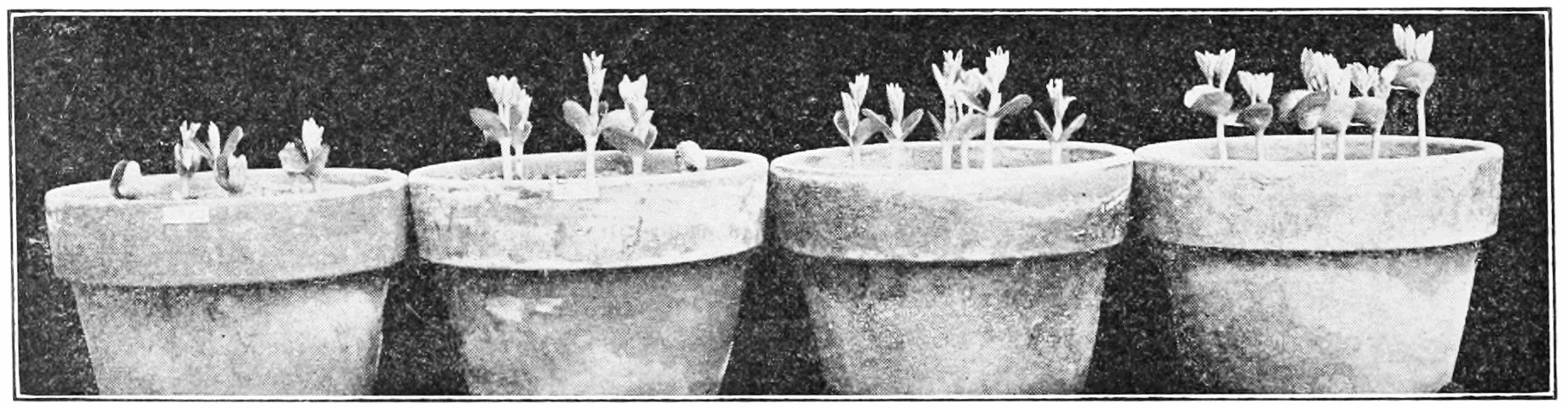 PSM V74 D230 The negative effects of radium exposure on plant growth.png